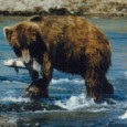 By: Jenny Hemmes-