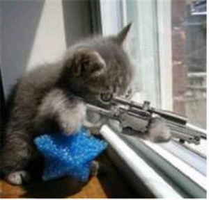 Amazing funny cats with guns-1